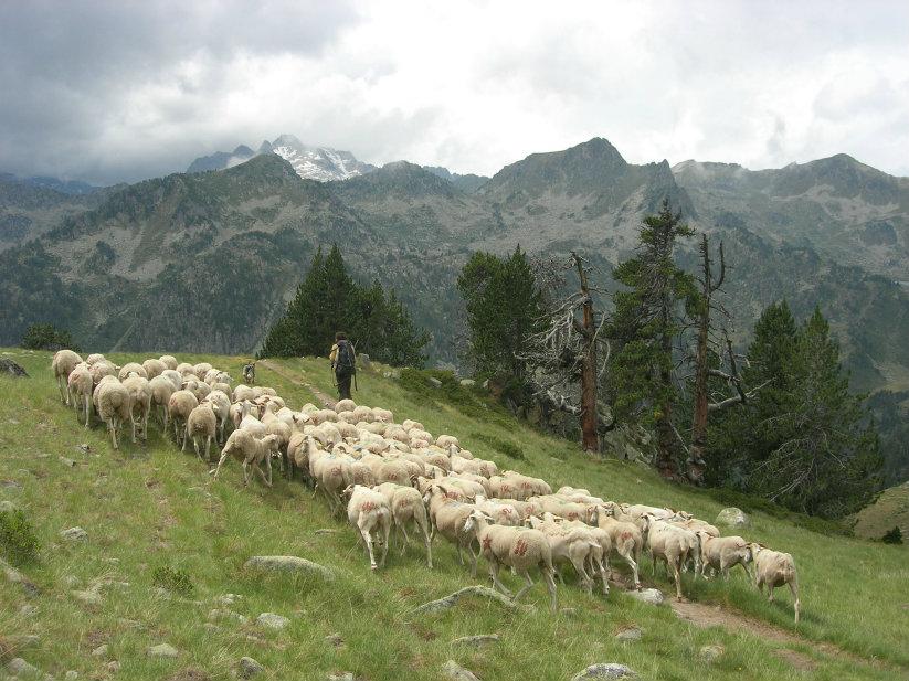 Le pastoralisme à Bastan