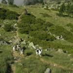 Pastoralisme francois ok