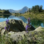 vue du lac fleur violette ok